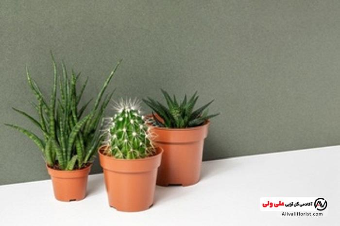 گیاهان مقاوم