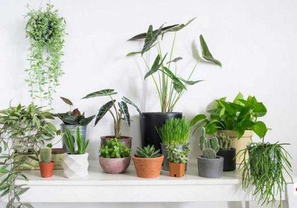 گیاهان آپارتمانی سمی