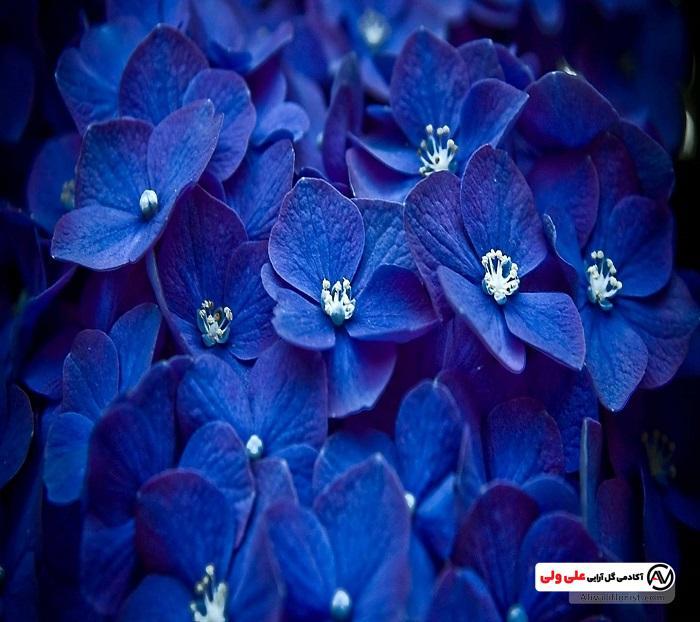 معنای رنگ گل آبی