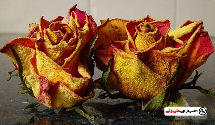 گل های خشک رز