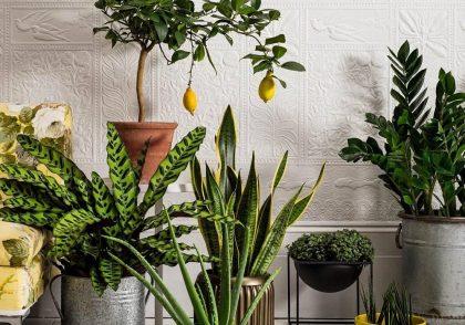 فنگ شویی با گل و گیاه