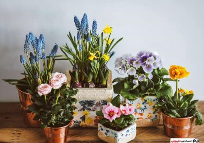 گل و گیاه زینتی و آپارتمانی