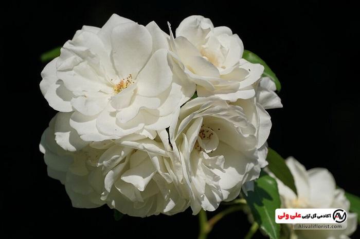 معنای رنگ گل سفید