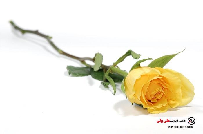 معنای گل زرد