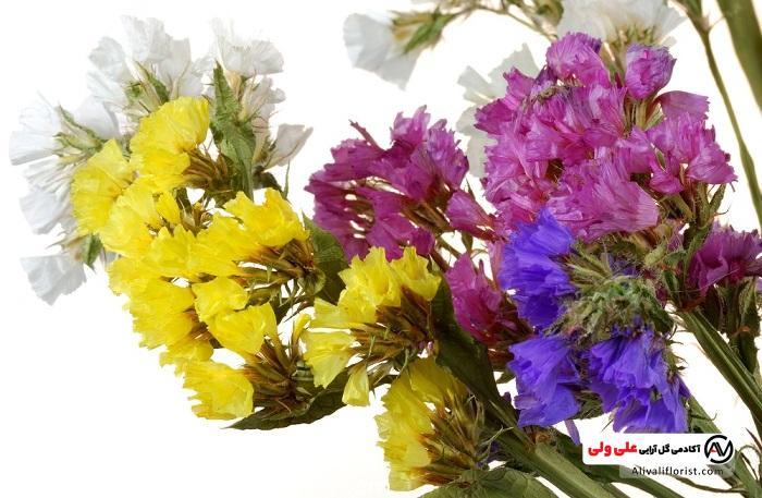 گل عروس یا ژیپسوفیلا در رنگ های متنوع
