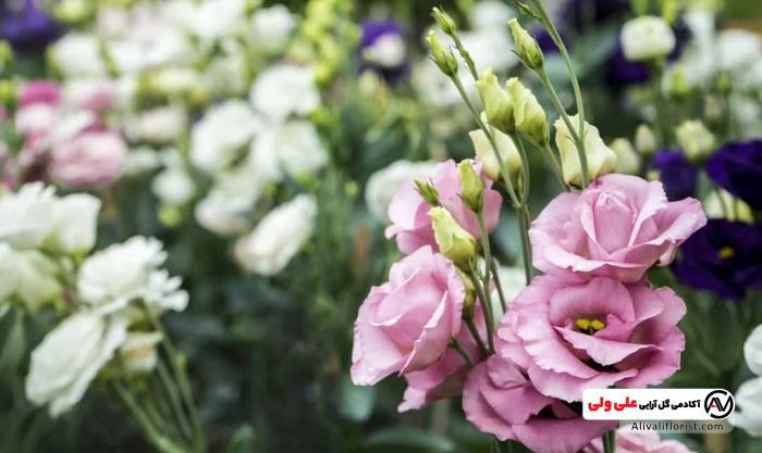گل های لیسیانتوس صورتی