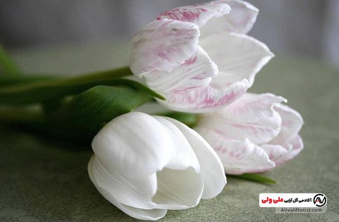 گل لاله سفید