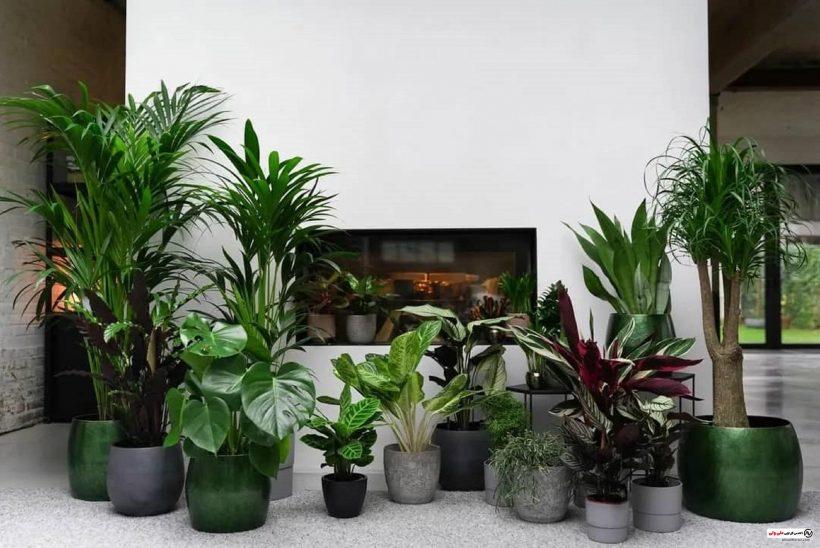 چیدمان گیاهان در منزل